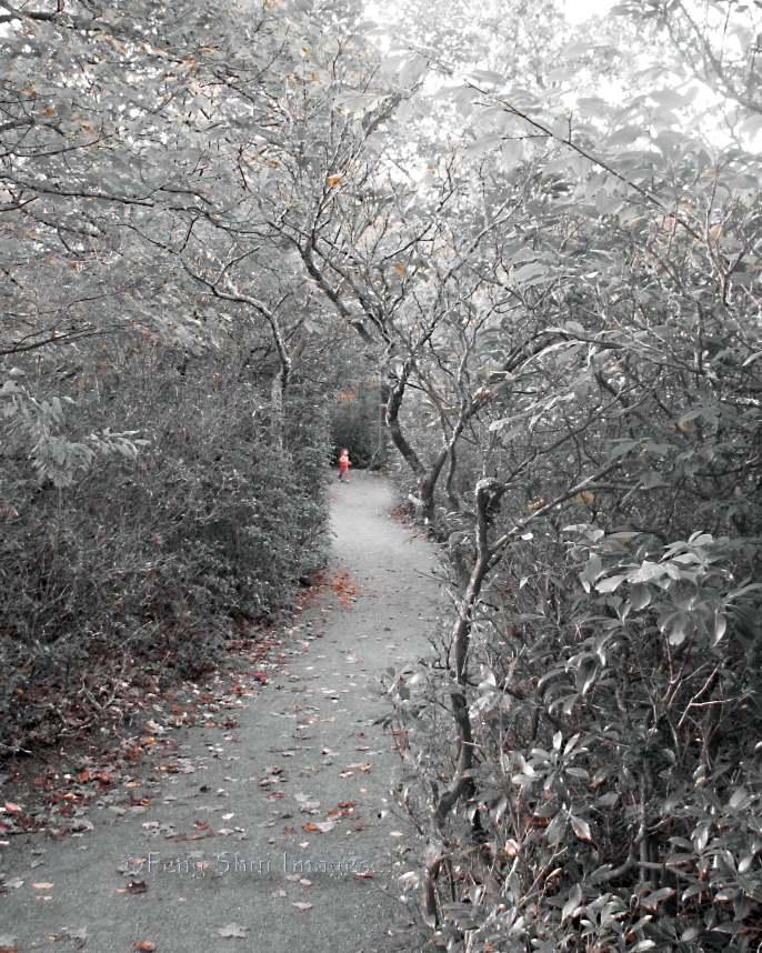 Joy,path,birth,family,Feng Shui