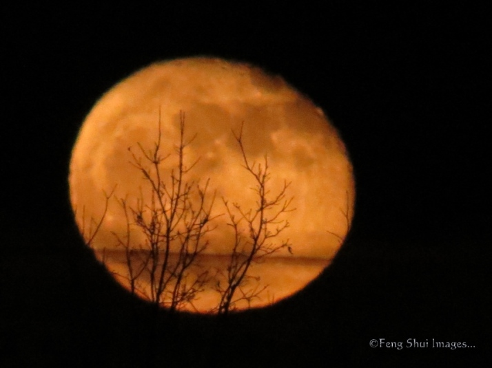 moon fall water trees