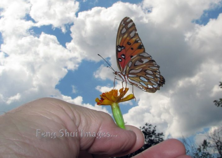 butterfly Nirvanah